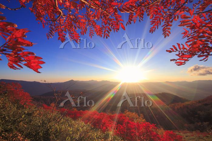 北海道 朝の赤岳第一花園から望むナナカマドの紅葉と武利岳など・・・