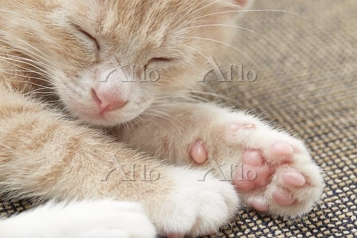 子猫の顔と手