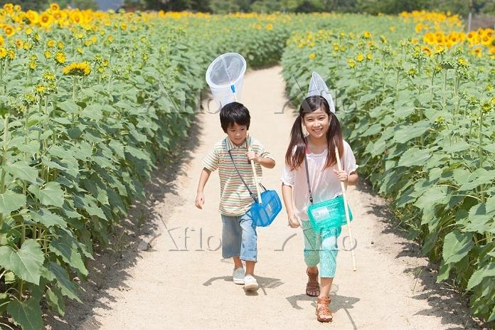 ひまわり畑で昆虫採集する姉弟