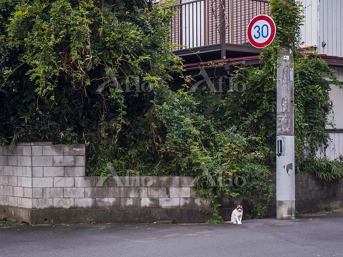 雑草に覆われる空き家と佇む猫