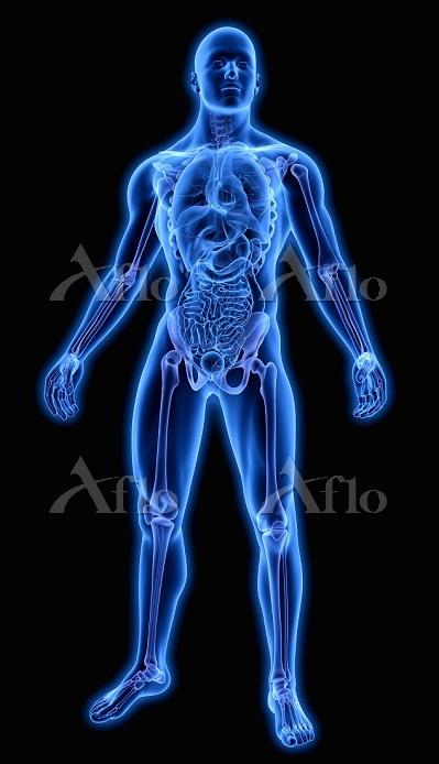骨と臓器 CG