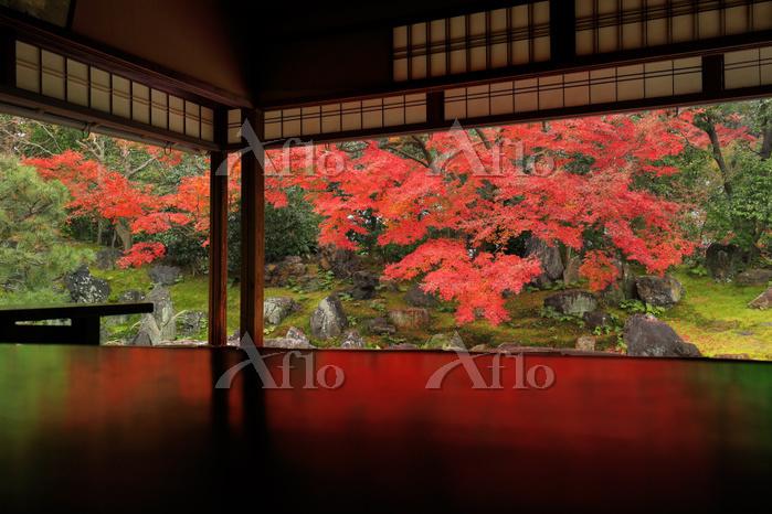 京都府 圓徳院 北書院から見る北庭の紅葉