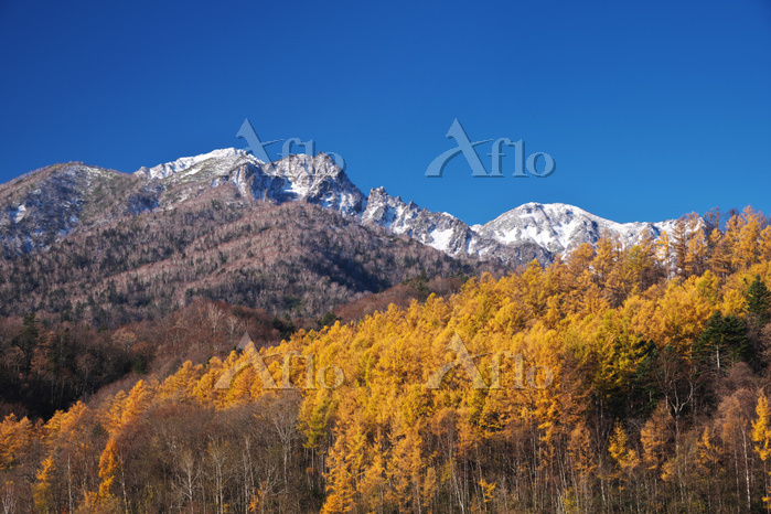 北海道 夕張山地とカラマツ林の秋