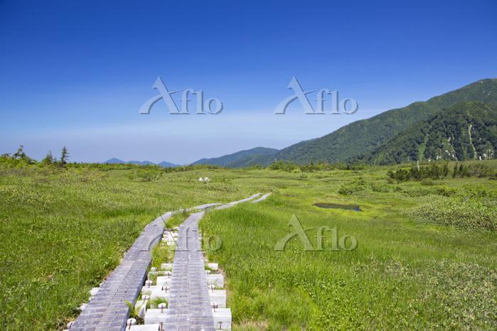 富山県 立山黒部アルペンルートの弥陀ヶ原