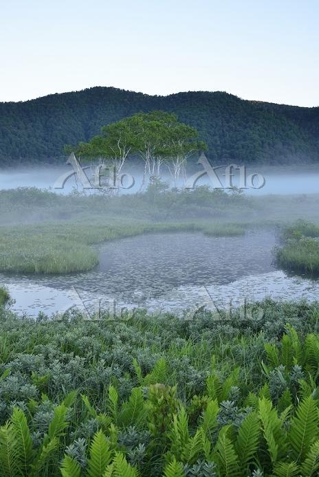 群馬県 中田代から望む池塘と白樺