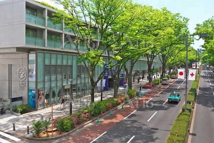 東京都 表参道の街並み