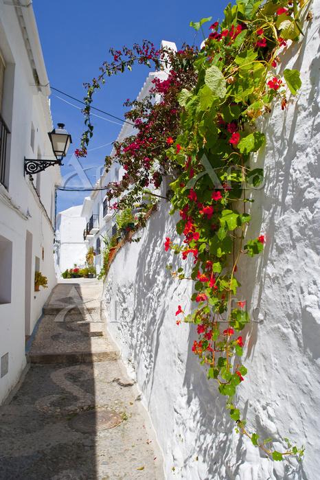 スペイン フリヒリアナ