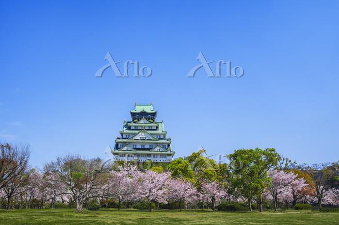 大阪城 天守閣と西の丸庭園の満開の桜