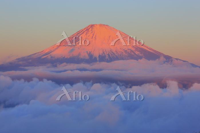 神奈川県 金時山山頂から望む朝日に染まる富士山と雲海