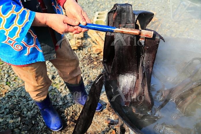 北海道 オヒョウニレの皮を茹でる(オヒョウニレの皮から繊維を・・・