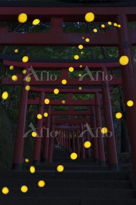 兵庫県 鳥居とヒメホタルの軌跡