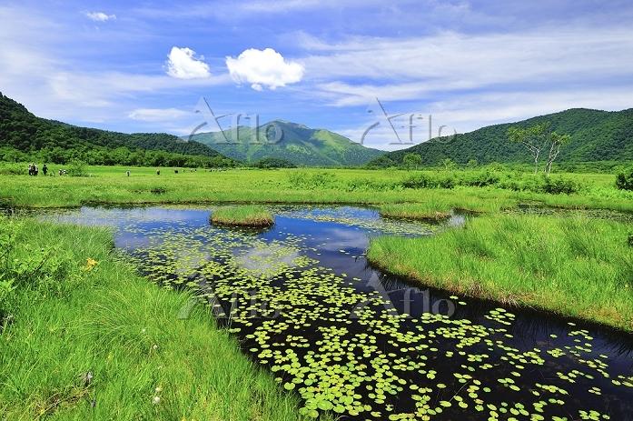 群馬県 尾瀬 竜宮十字路の池塘から望む至仏山