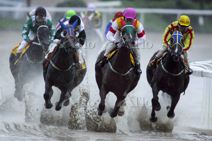 Seoul Race Course,Gwacheon,Gye・・・