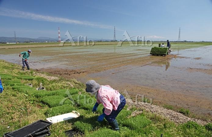 庄内平野の米作り 田植え 2014.05.11 山形県 酒田・・・