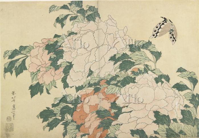 葛飾北斎 「牡丹に蝶」