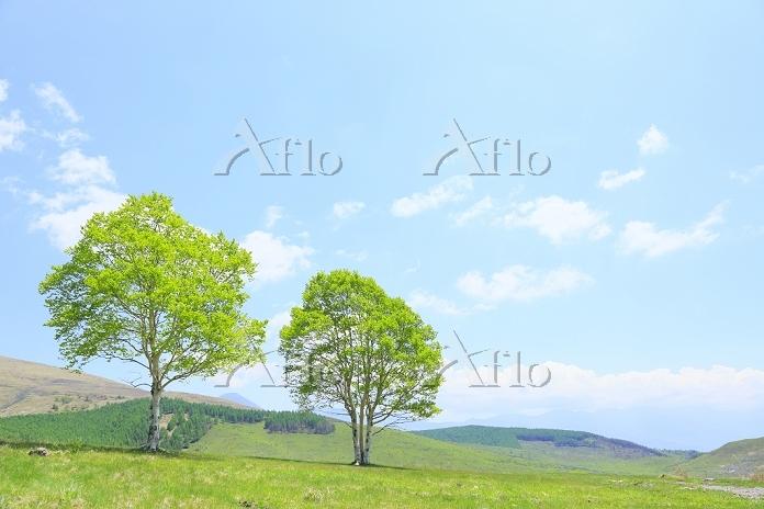 長野県 霧ヶ峰高原 新緑の木と青空