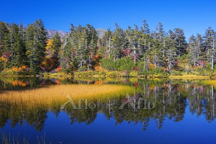 北海道 紅葉の緑沼 大雪高原沼