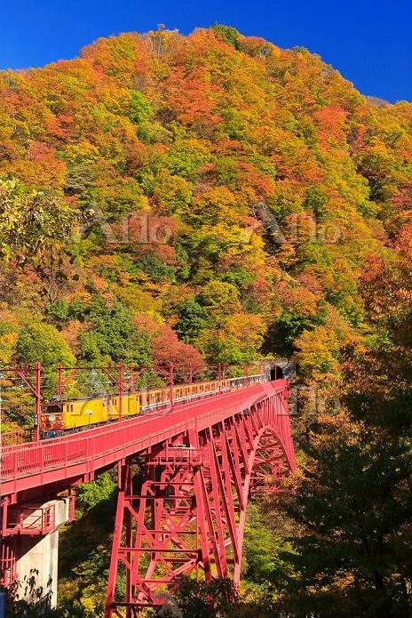富山県 紅葉の黒部峡谷鉄道