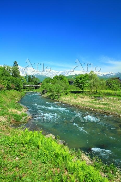 長野県 白馬村 大出の吊橋と北アルプス