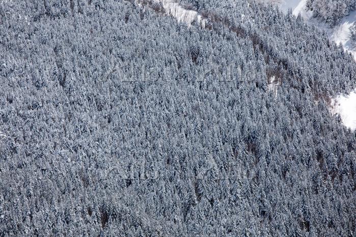 長野県 八ヶ岳 中山展望台より厳冬の樹林帯