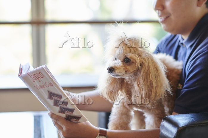 旅館でくつろぐ男性とトイプードル 犬
