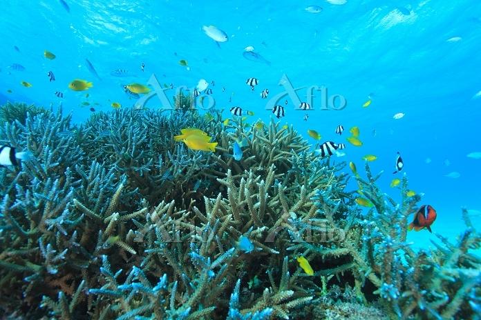 サンゴ礁のイメージ