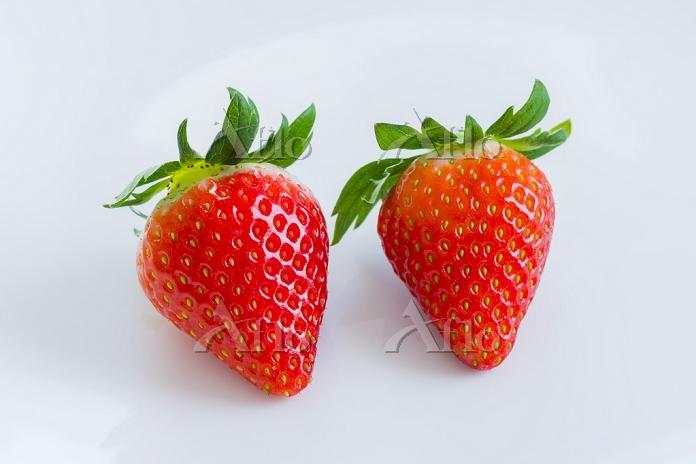 果物 イチゴ とちおとめ