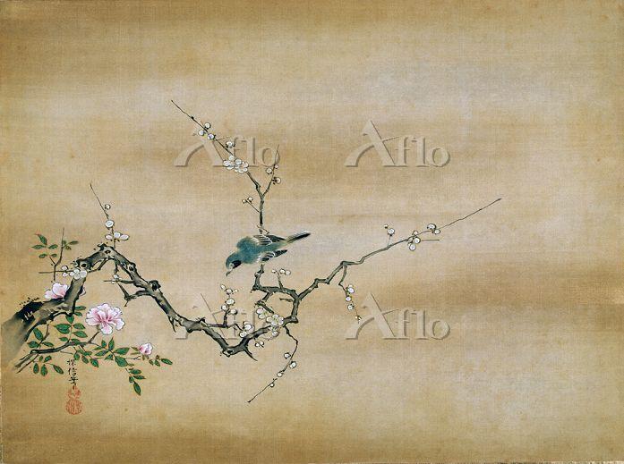 狩野探信 「花鳥画 白梅小禽図 肉筆画」