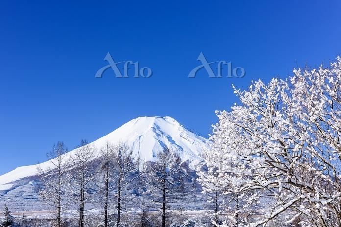 山梨県 花の都公園 雪景色と富士山