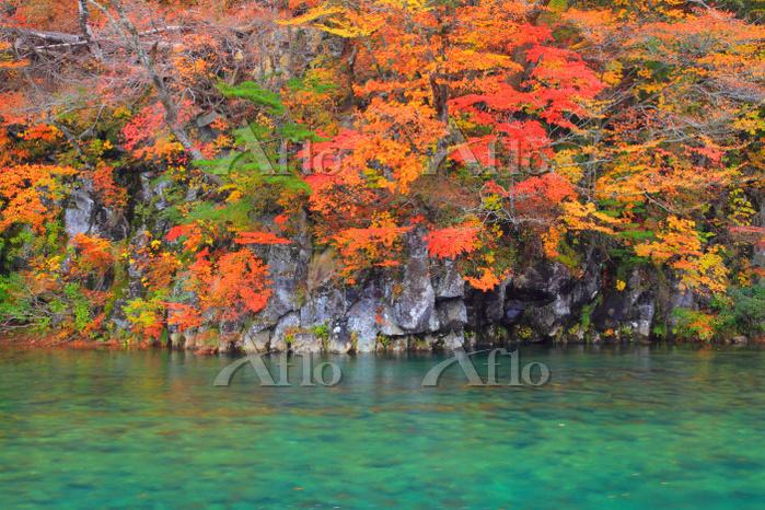秋田県 法体の滝付近 子吉川源流 清流と紅葉