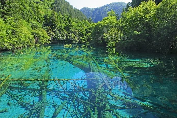 中国 九寨溝の五花海と森
