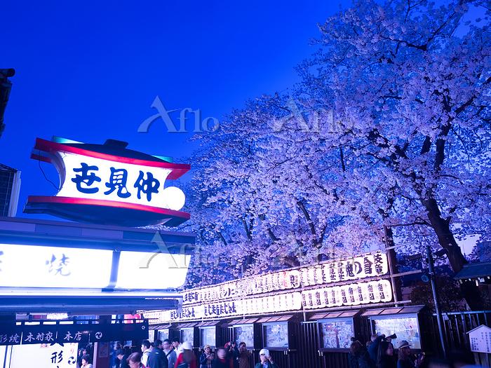 東京都 浅草仲見世通りの夜桜