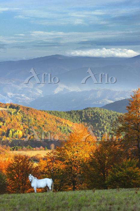 セルビア 秋の平原