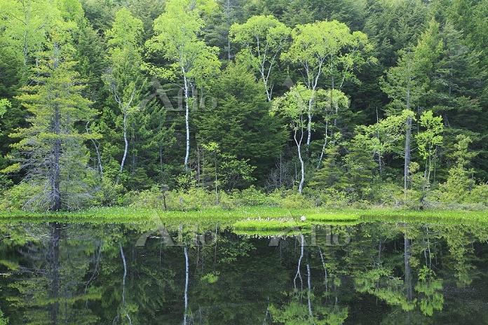 長野県 乗鞍高原 牛留池と森