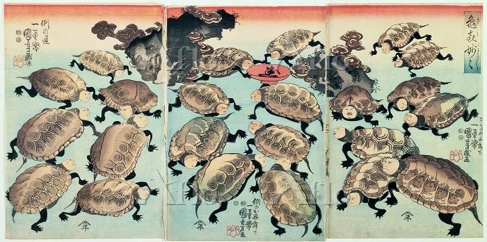 歌川国芳 「亀喜妙々」