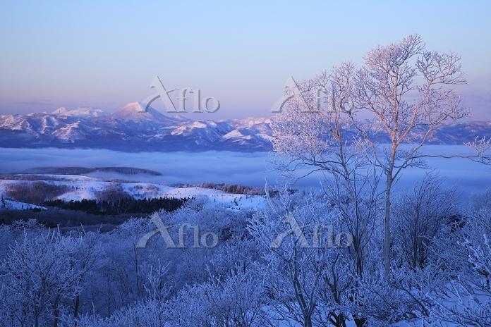 北海道 朝焼けの雄阿寒岳と霧氷