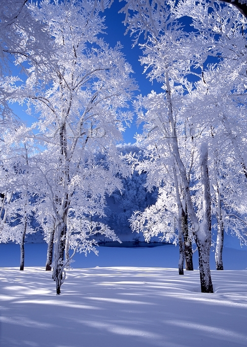 山形県 蔵王温泉スキー場 ドッコ沼の霧氷