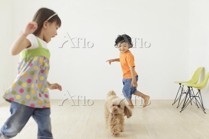 リビングで遊ぶ男の子と女の子とトイプードル 犬