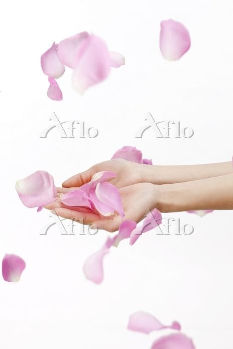 舞落ちるバラの花びらと手