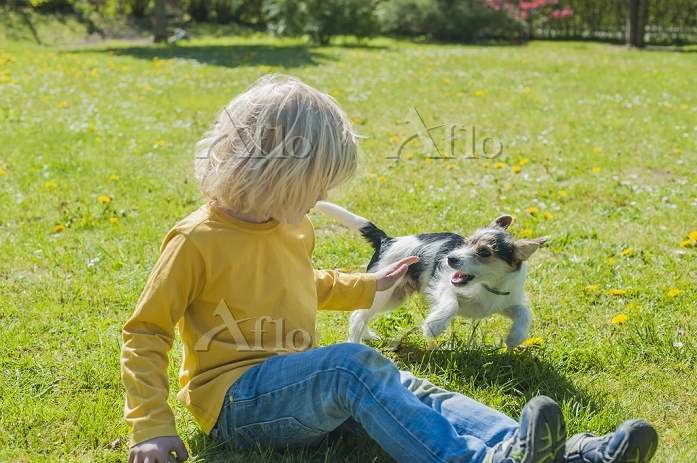 Boy playing with Jack Russel T・・・