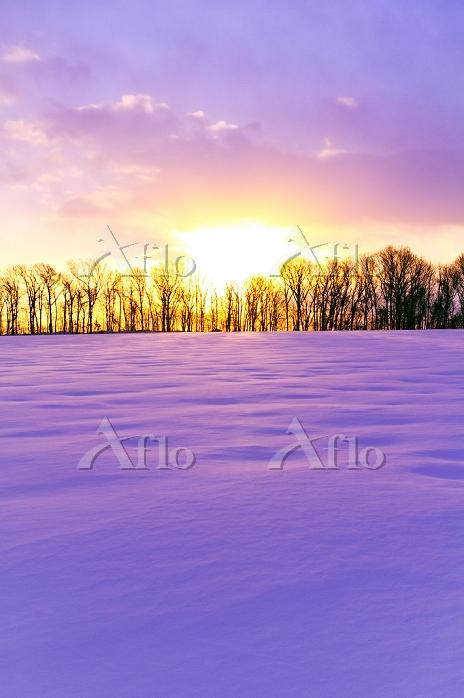 北海道 元旦の朝日に染まる雪野原