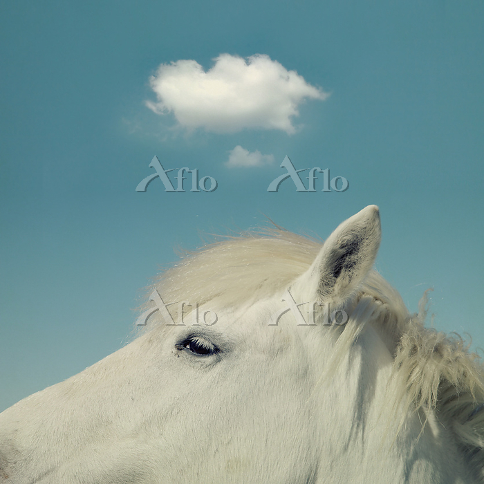 Head of a white horse Photo by・・・