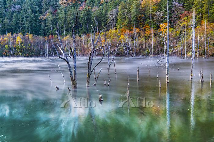 長野県 朝靄の自然湖