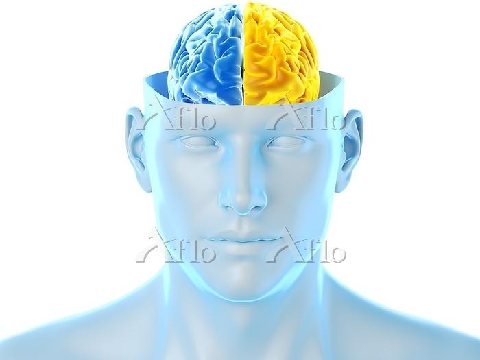 Brain hemispheres, illustratio・・・