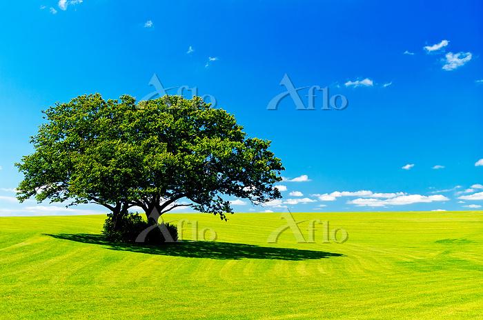 北海道 丘と双子の木と青空