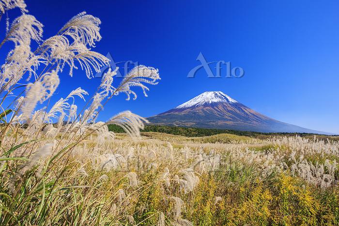 静岡県 ススキ原の朝霧高原より富士山