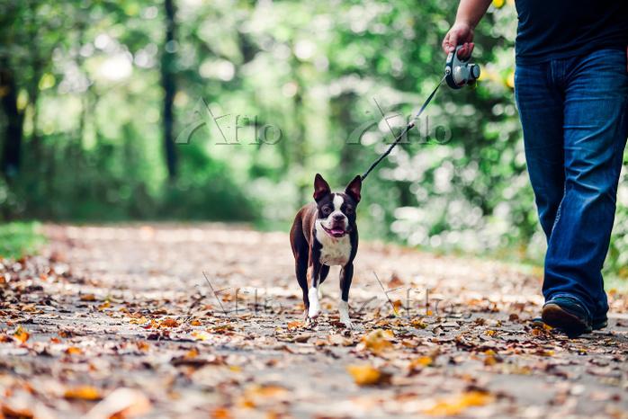 Man walking dog in rural setti・・・
