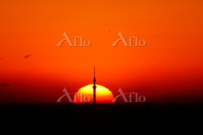 埼玉県 スカイツリーの背後から昇る朝日