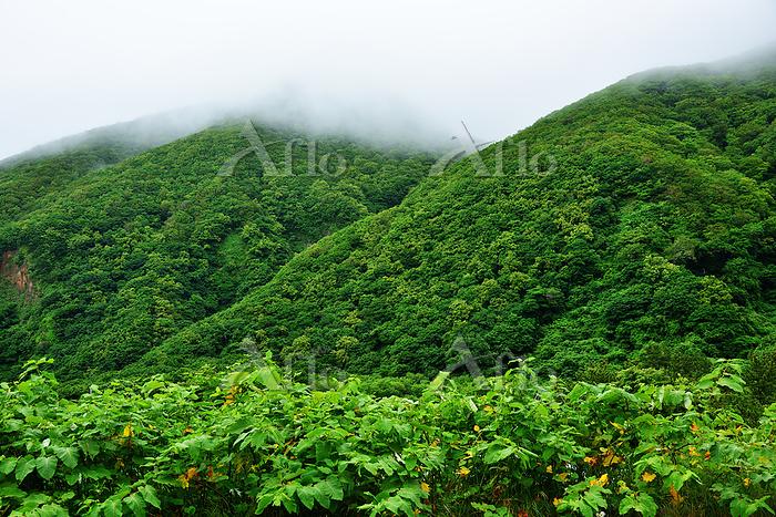 蝦夷梅雨の神威山