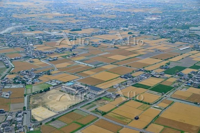 筑紫平野 小麦畑と集落